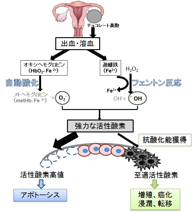 卵巣癌発生のメカニズムの解明